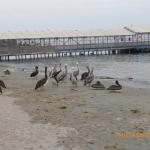 Plaża wLimie