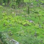 Barbarzyńskie zniszczenia cmentarza naRosie wWilnie 4