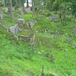 Barbarzyńskie zniszczenia cmentarza naRosie wWilnie 6