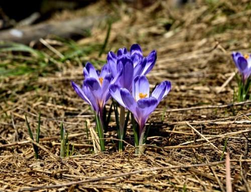 Wiosna wSłupsku